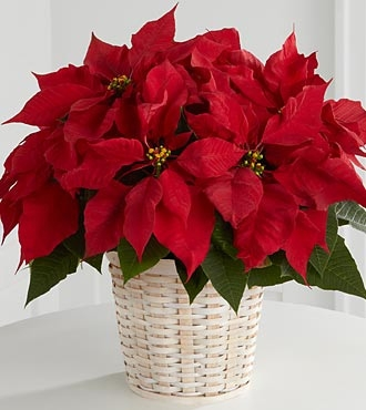 Flowers for usa -  Red Poinsettia Basket (Small)   flowers