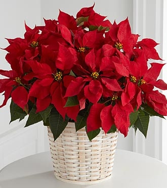 Flowers for usa -  Red Poinsettia Basket (Large)   flowers