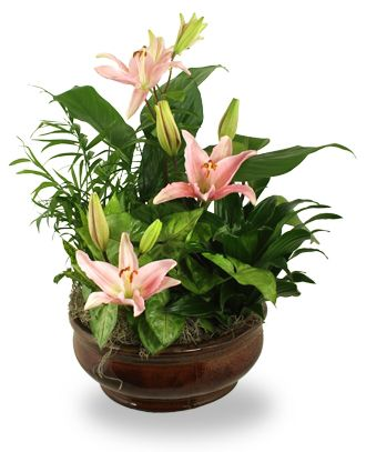 Flowers for USA - Radiant Foliage Planter flowers