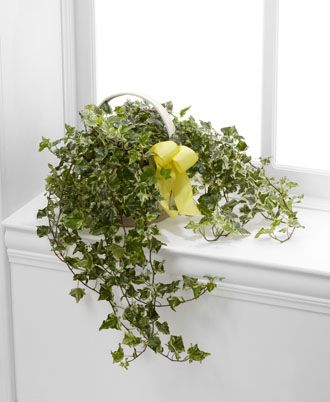 Flowers for USA - Solace Ivy Planter flowers