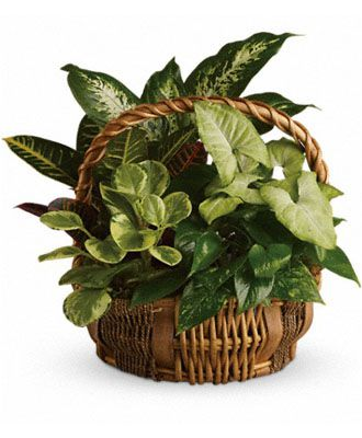 Flowers for USA - Emerald Garden Basket flowers