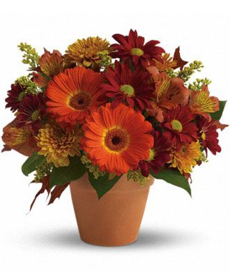 Flowers for usa - Golden Glow flowers