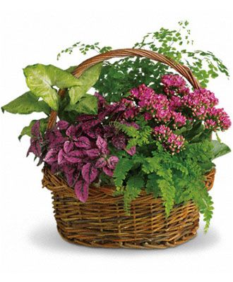 Flowers for USA - Secret Garden Basket flowers