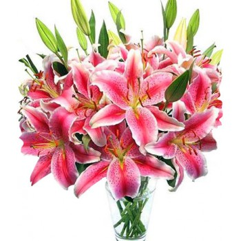 bahrain pretty pink flower delivery pink lilies flower bahrain flowers pretty pink flower bouquetarrangement mightylinksfo Gallery