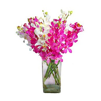 Doha flowers  -  Splendid Orchids Flower Bouquet/Arrangement