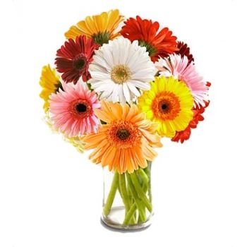 Curacao flowers  -  Day Dream Flower Bouquet/Arrangement