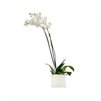 Fujairah flowers  -  White Elegance Flower Bouquet/Arrangement
