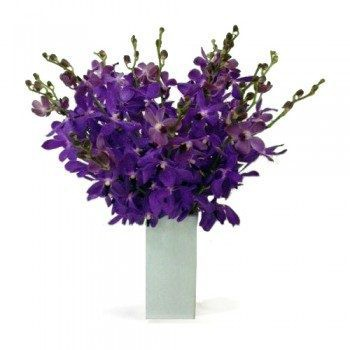 Cordoba flowers  -  Devine Choice Flower Delivery