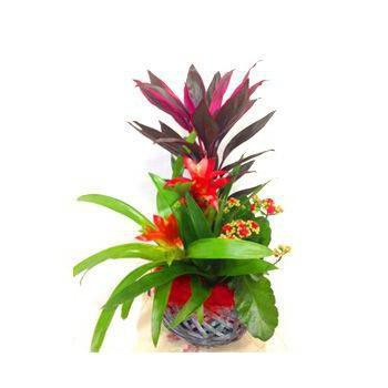 Tripoli flowers  -  Tropical Garden Flower Bouquet/Arrangement
