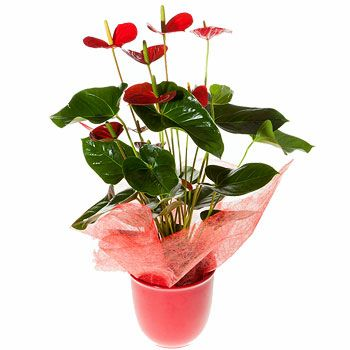 Cork flowers  -  Stylish Flower Delivery