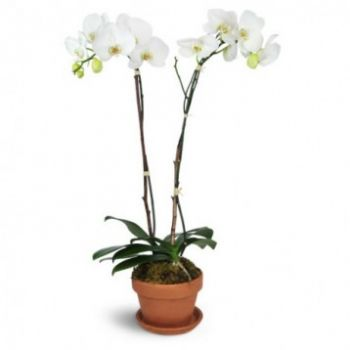 Marbella flowers  -  Pure White Flower Bouquet/Arrangement