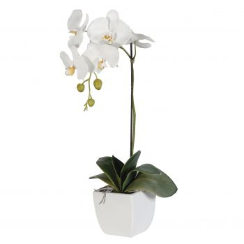 Oral flowers  -  White Elegance Flower Delivery