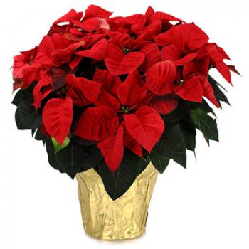 Casablanca flowers  -  Festive Delight Flower Delivery
