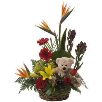 St. Lucia online Florist - Tropical Bear Basket Bouquet
