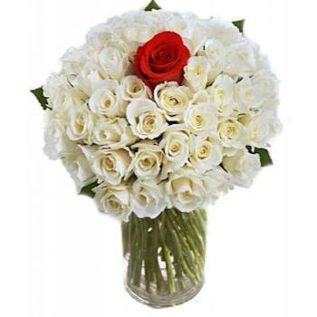 Macedonia flowers  -  Thinking of You Flower Bouquet/Arrangement