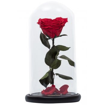 Libanon blomster- Enchanted Rose Blomst Levering